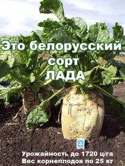 Высокоурожайные семена кормовой свеклы сорт ЛАДА