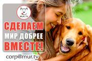 Помощь животнымм